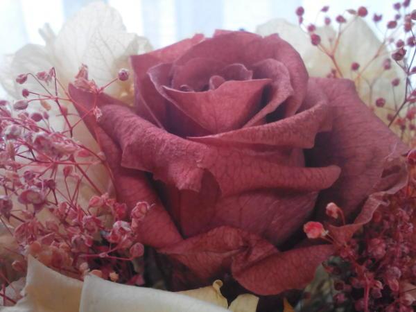 バラの花のイメージ
