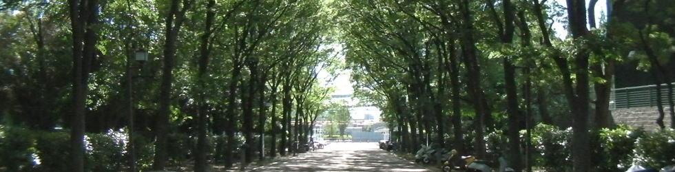 緑の道のイメージ