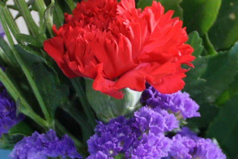 コープこうべのお花